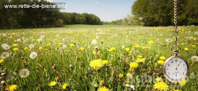 Blumenwiesen-im-Zeitraffer