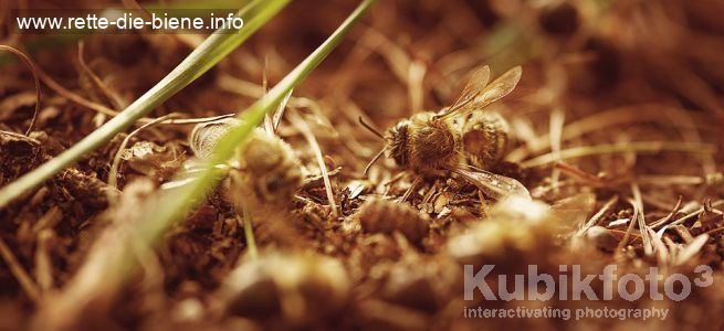 Tote-Bienen